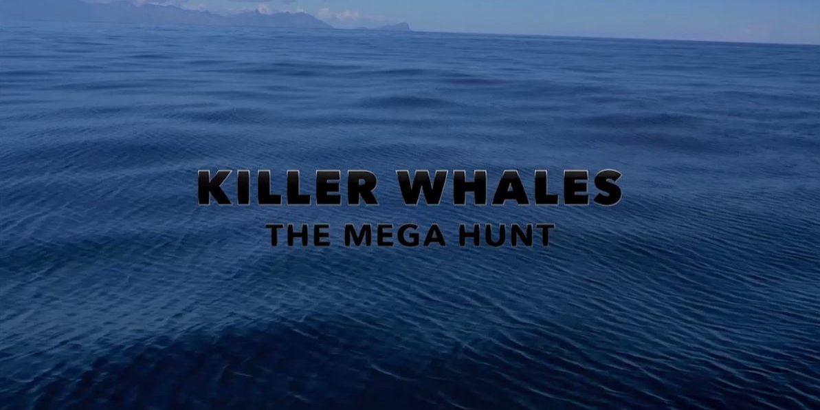 KillerWhales_TitleStill