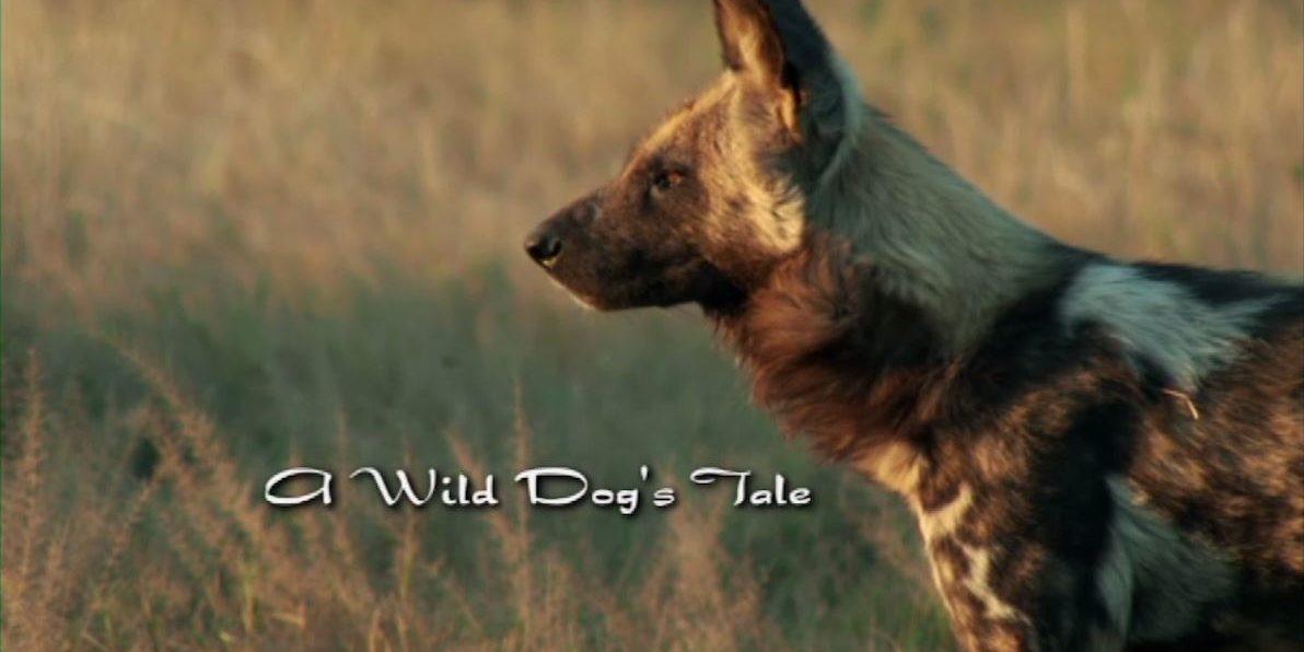 WildDogsTale_TitleStill